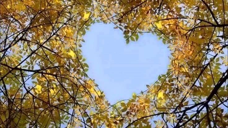 Bu kalpler bir başka güzel galerisi resim 4